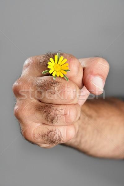 Foto stock: Contraste · peludo · homem · mão · flor · flor · da · primavera