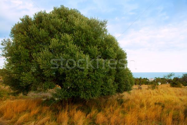 Sierra de Irta in Castellon province with sea view Stock photo © lunamarina