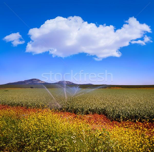 Via de la Plata way cereal fields in Spain Stock photo © lunamarina