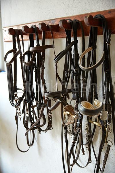 Horses tack in a row headgear halters bridles Stock photo © lunamarina