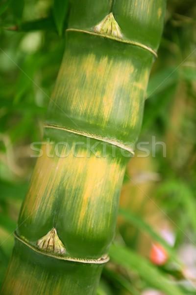 Bambù primo piano dettagli verde giallo Foto d'archivio © lunamarina