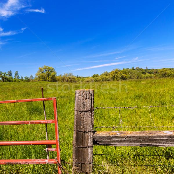 Califórnia prado rancho blue sky primavera dia Foto stock © lunamarina
