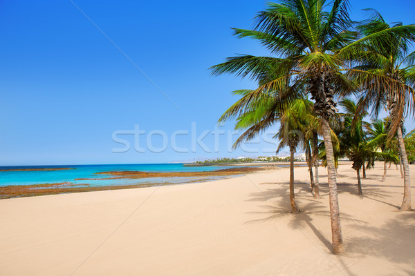 Arrecife Lanzarote Playa Reducto beach palm trees Stock photo © lunamarina