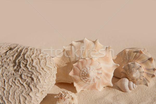 brain coral and seashells on white sand beac Stock photo © lunamarina