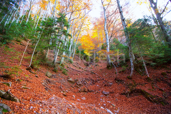 Autumn forest in Pyrenees Valle de Ordesa Huesca Spain Stock photo © lunamarina