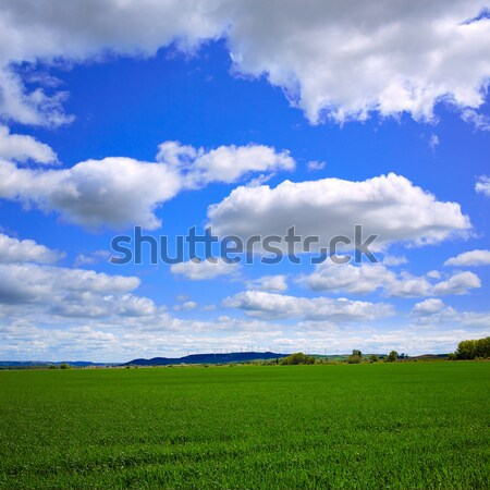 Cereal fields The Way of Saint James Castilla Leon Stock photo © lunamarina