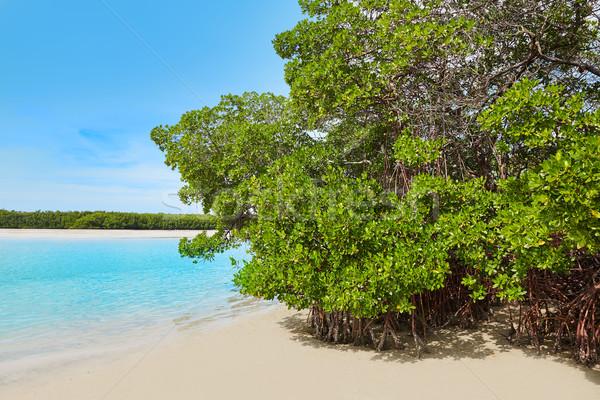 Florida plaży chmury ocean podróży tropikalnych Zdjęcia stock © lunamarina