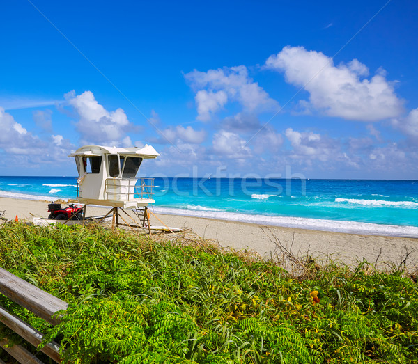 Palma praia torre Flórida EUA água Foto stock © lunamarina