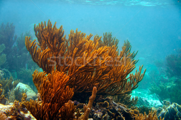 Mesoamerican barrier Great Mayan Reef Stock photo © lunamarina