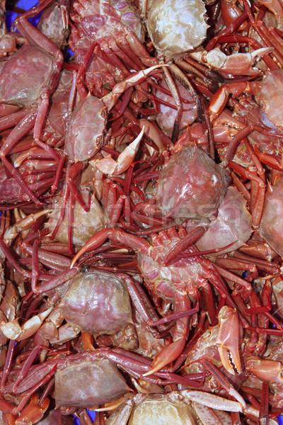crab from mediterranean sea catch Stock photo © lunamarina