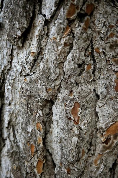 Tree trunk texture Stock photo © lunamarina