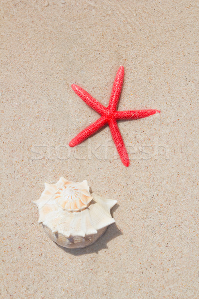 Stockfoto: Zeester · wit · zand · strand · zomervakantie · symbolen