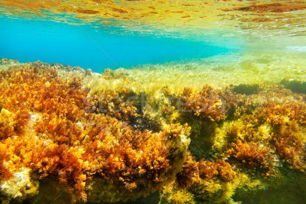 水中 海景 ターコイズ テクスチャ 草 ストックフォト © lunamarina