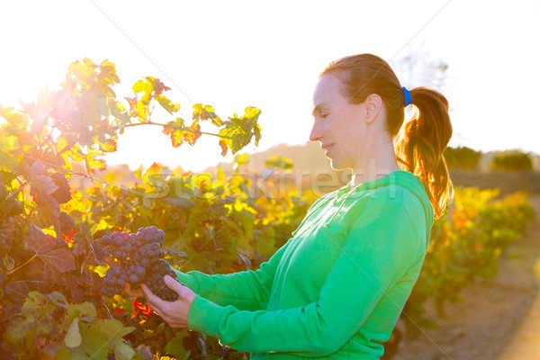 Farmer woman in vineyard harvest autumn leaves in mediterranean Stock photo © lunamarina