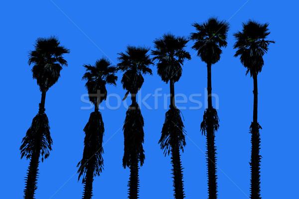 Kalifornia pálmafák western szörf íz égbolt Stock fotó © lunamarina