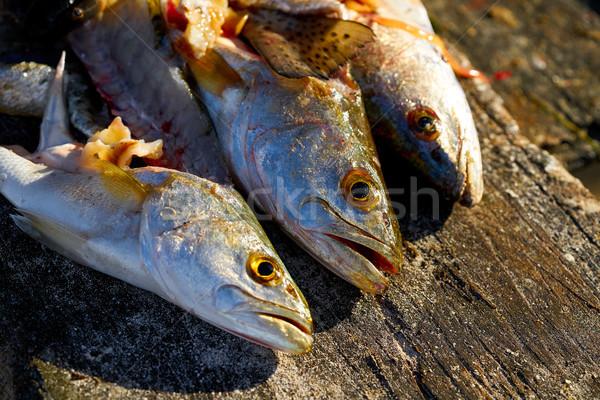 Croaker Corvina fillet fish in Mexico Stock photo © lunamarina