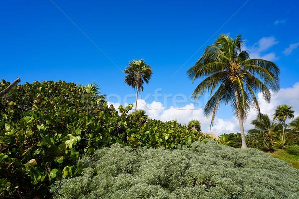 Albero spiaggia alberi estate Palm Foto d'archivio © lunamarina