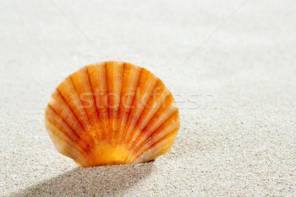 beach sand shell tropical perfect summer vacation Stock photo © lunamarina