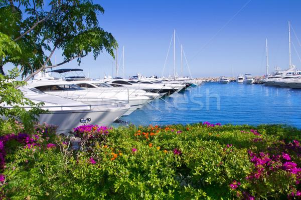 Calvia Puerto Portals Nous bougainvilleas garden in Mallorca Stock photo © lunamarina