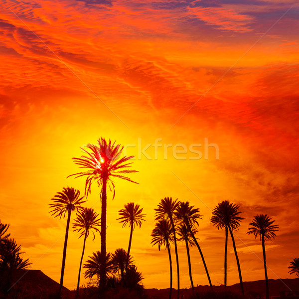 Almeria in Cabo palm trees in Rodalquilar Spain Stock photo © lunamarina