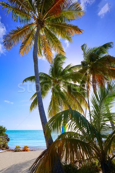 Sleutel west Florida strand palmbomen USA Stockfoto © lunamarina