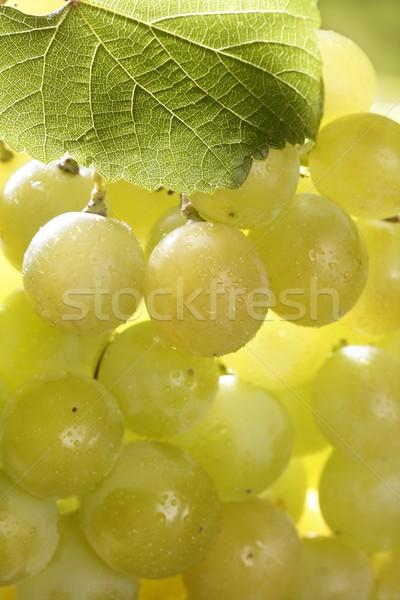 Сток-фото: желтый · осень · винограда · фрукты · макроса