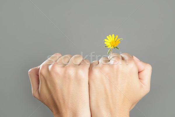Foto stock: Planta · crescente · mulher · mãos · vida · árvore