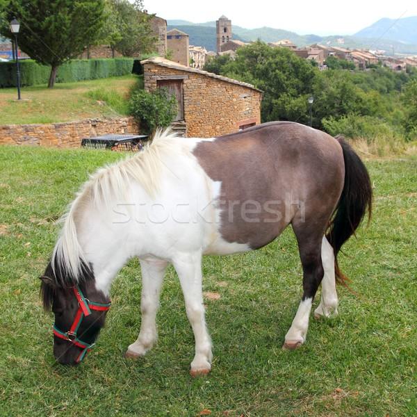 Pony horse grazing meadow in Ainsa Pyrenees Stock photo © lunamarina
