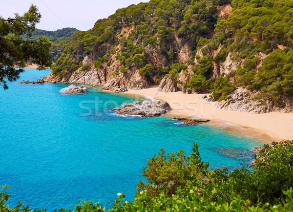Praia natureza paisagem fundo verão azul Foto stock © lunamarina