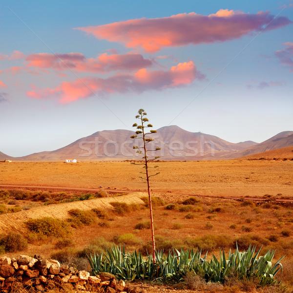 Canárias Espanha montanha azul viajar ilha Foto stock © lunamarina