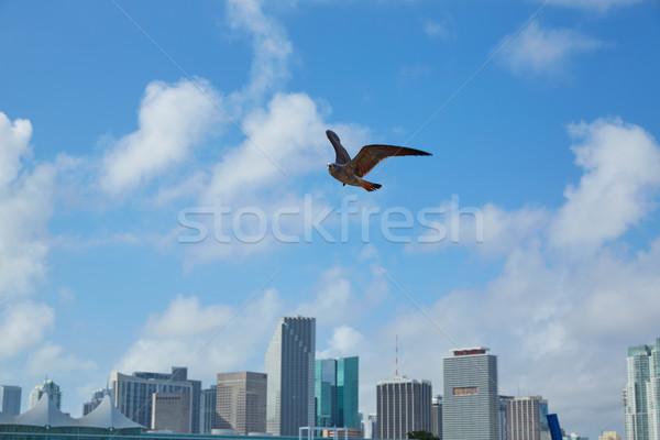 Miami belváros sziluett sirály repülés Florida Stock fotó © lunamarina