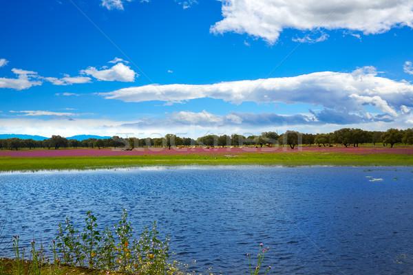 Extremadura dehesa grasslands lake in Spain Stock photo © lunamarina