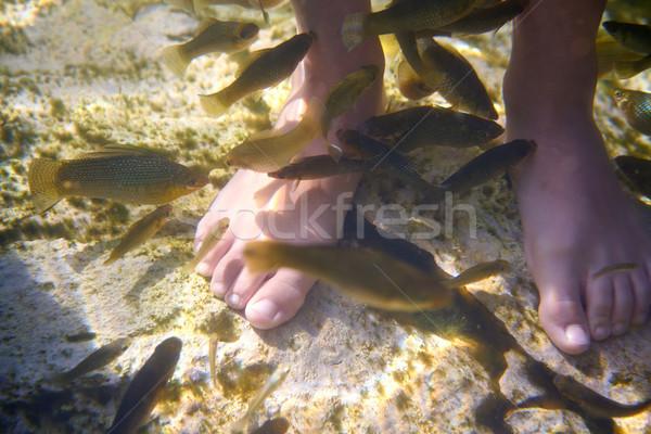 Cenotes Mexico fishes suck feet dead skin Stock photo © lunamarina