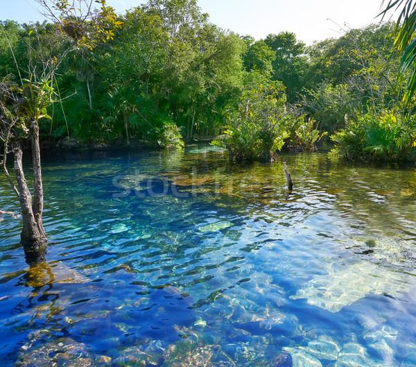 Cenote in Riviera Maya of Mayan Mexico Stock photo © lunamarina