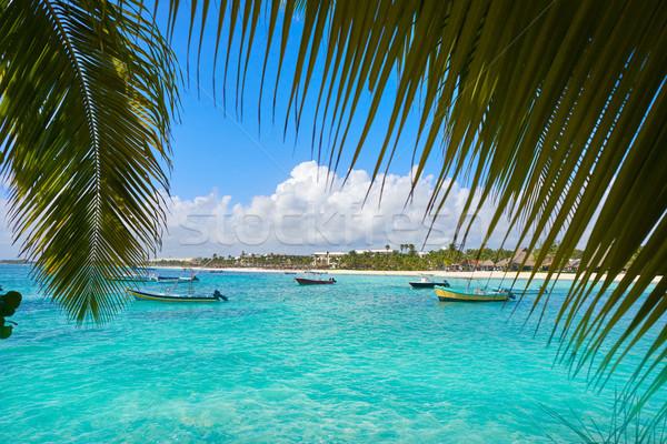 Stok fotoğraf: Plaj · ağaçlar · su · yaz · palmiye