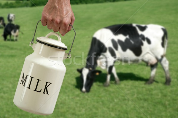 Milk pot farmer hand cow in meadow Stock photo © lunamarina