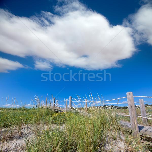 сын небе цветы природы морем фон Сток-фото © lunamarina