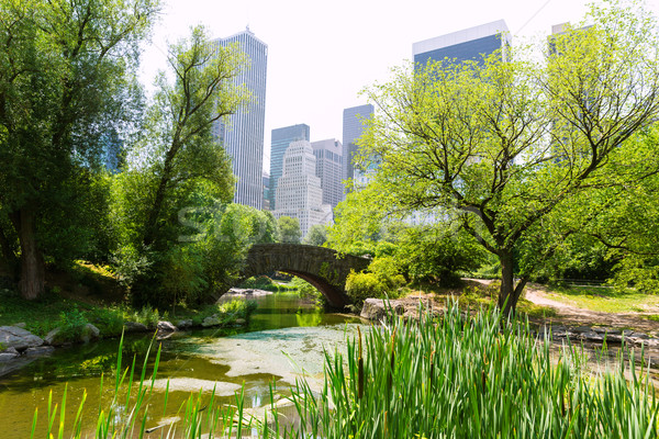 Central Park The Pond Manhattan New York Stock photo © lunamarina