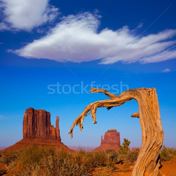Vadi batı eldiveni Utah kurutulmuş şube Stok fotoğraf © lunamarina