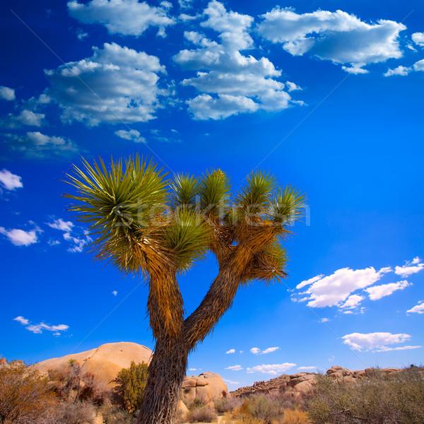 Joshua Tree National Park Yucca Valley California Stock photo © lunamarina