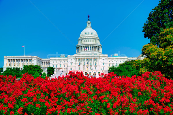 Stock photo: Capitol building Washington DC pink flowers USA