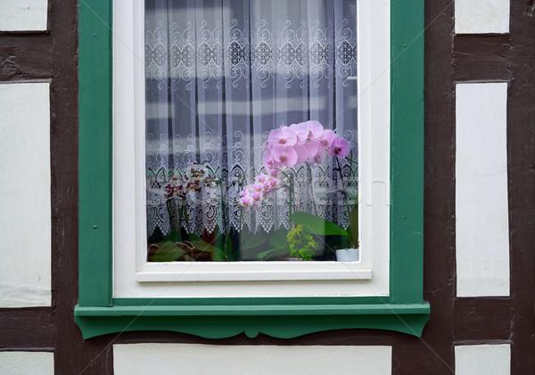 Stolberg orchid flowers window in Harz Germany Stock photo © lunamarina