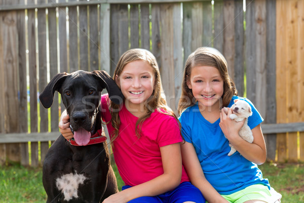 Twin sisters puppy pet dog and great dane playing Stock photo © lunamarina
