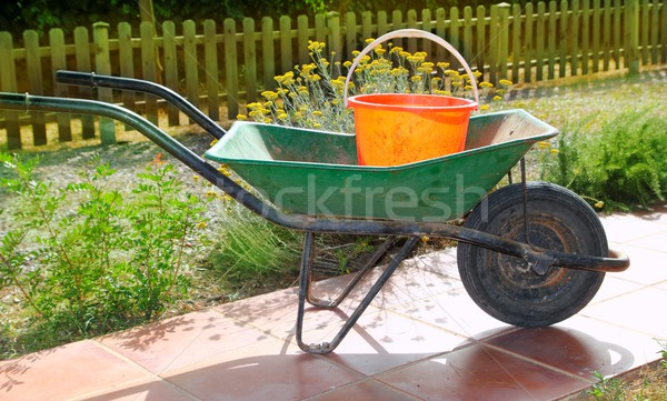 gardener green wheel barrow with orange pail Stock photo © lunamarina