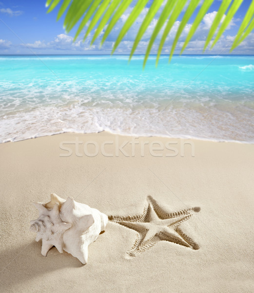 caribbean beach starfish print shell white sand Stock photo © lunamarina