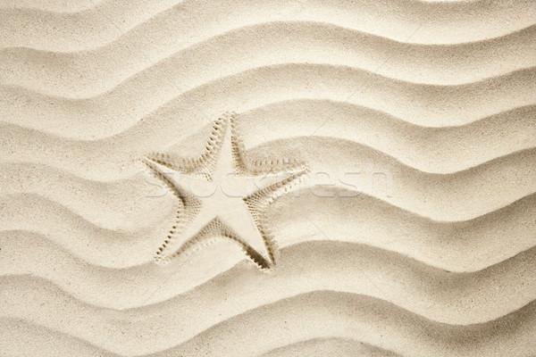 Foto stock: Praia · starfish · imprimir · branco · caribbean · areia