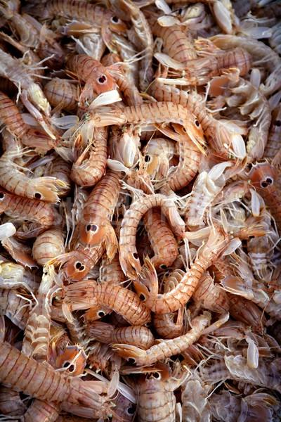 Mediterranean sea crustacean Squilla mantis Stock photo © lunamarina