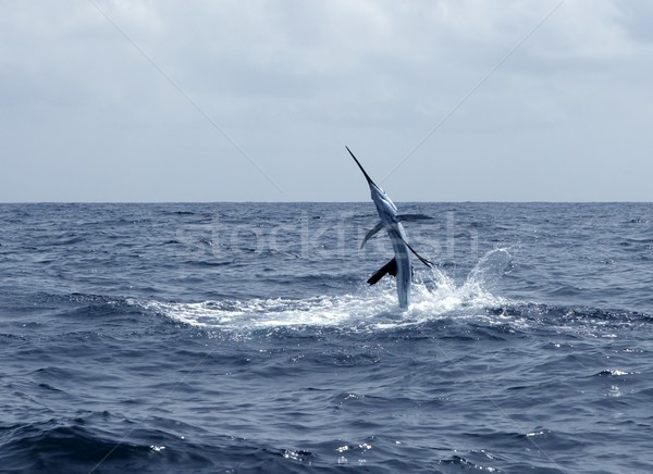 Sailfish saltwater sport fishing jumping  Stock photo © lunamarina