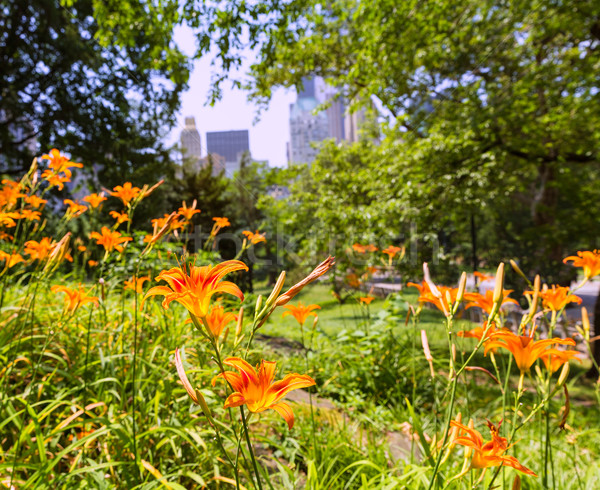 Central Park Manhattan New York bloemen hemel voorjaar Stockfoto © lunamarina
