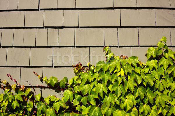 Cape Cod wooden wall detail Massachusetts Stock photo © lunamarina